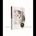 Dosky A5 školské + BOX KARTON Mačka